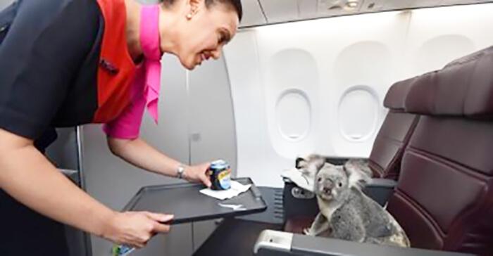 animal_avião_aero-40715-59762.jpg