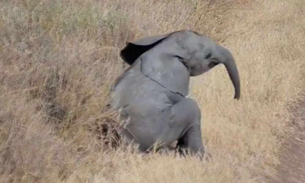 abandoned-baby-elephant-all-alone-36868
