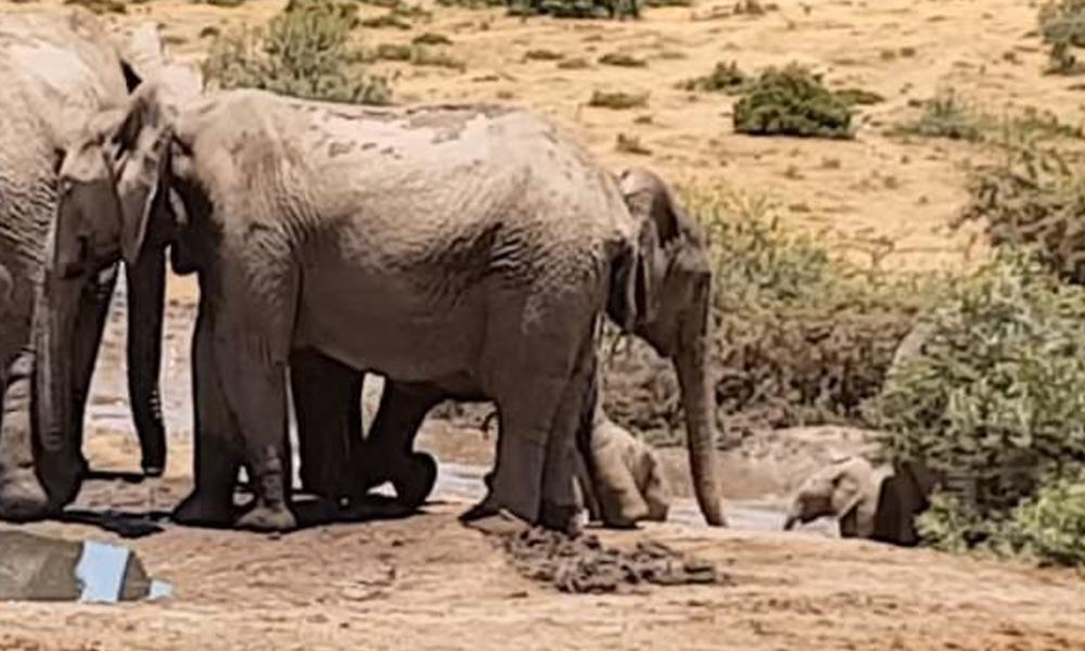 herd-helos-stuck-baby-elephant-77891