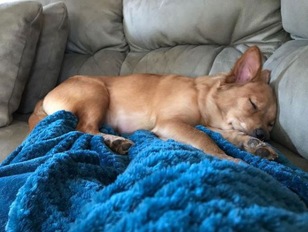 Rosie sleeping on a blue blanket