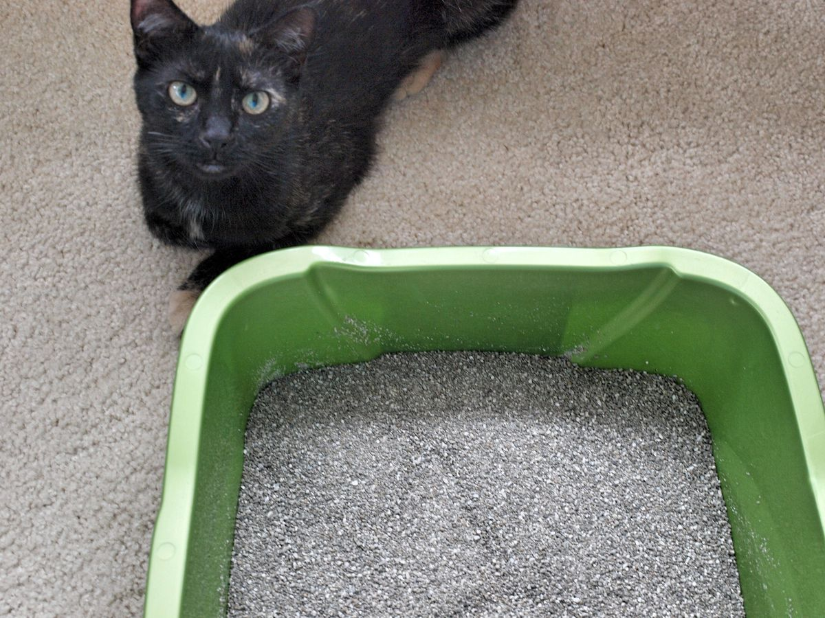 They Do Their Business Outside The Litter Box Because They Don't Like The Box