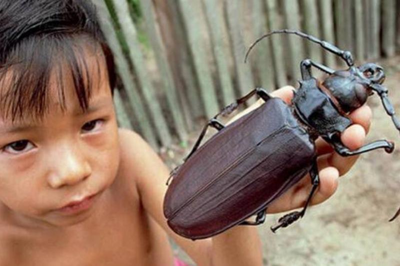 beetle-11781