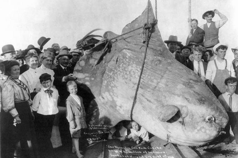 sunfish-51722