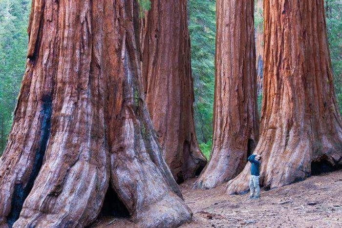 How-to-See-the-Tallest-Trees-on-Earth_-Californias-Redwoods-55168