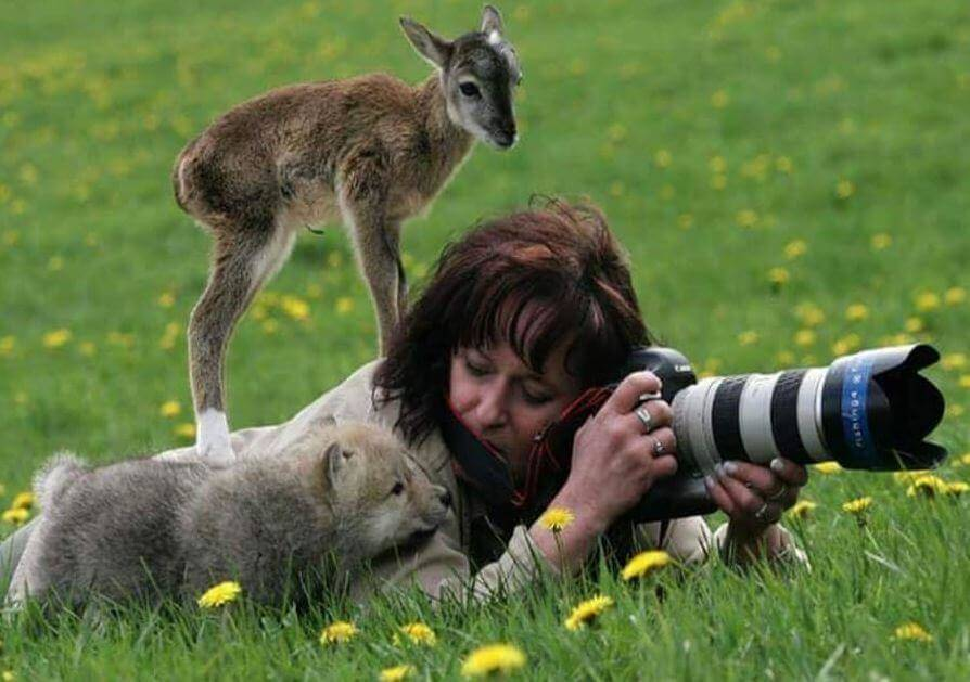 animals-photographer.jpg-61661