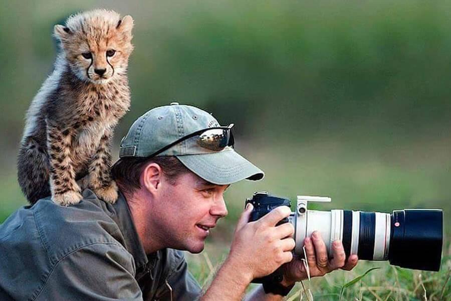 baby-cheetah-on-photographer-87536
