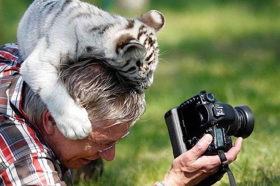 baby-tiger-hat-31630