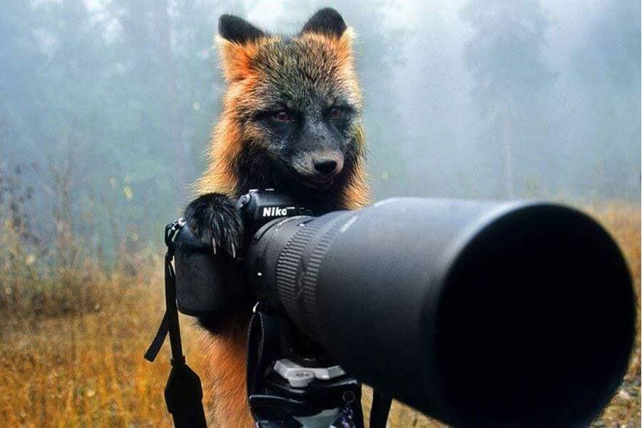 fox-becomes-photographer-43274