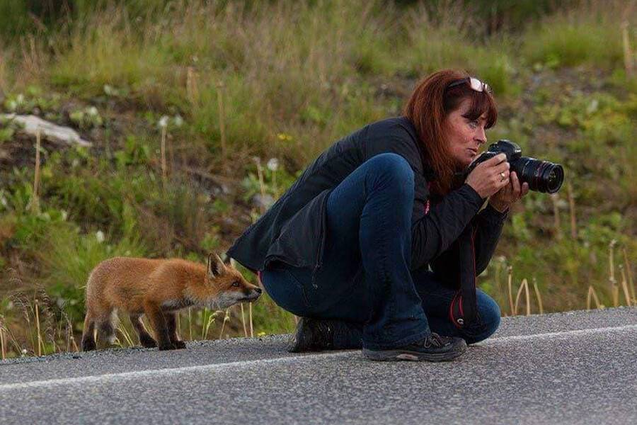fox-checks-out-photographer-from-behind-59931