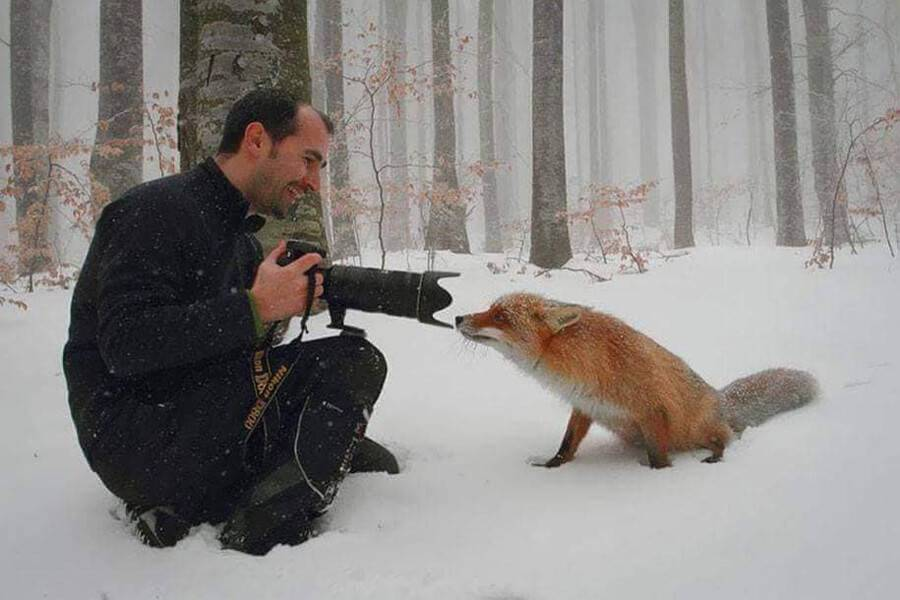 fox-confused-by-camera-43354