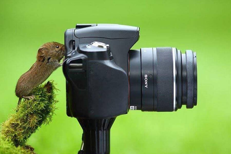 mouse-is-photographer-16168