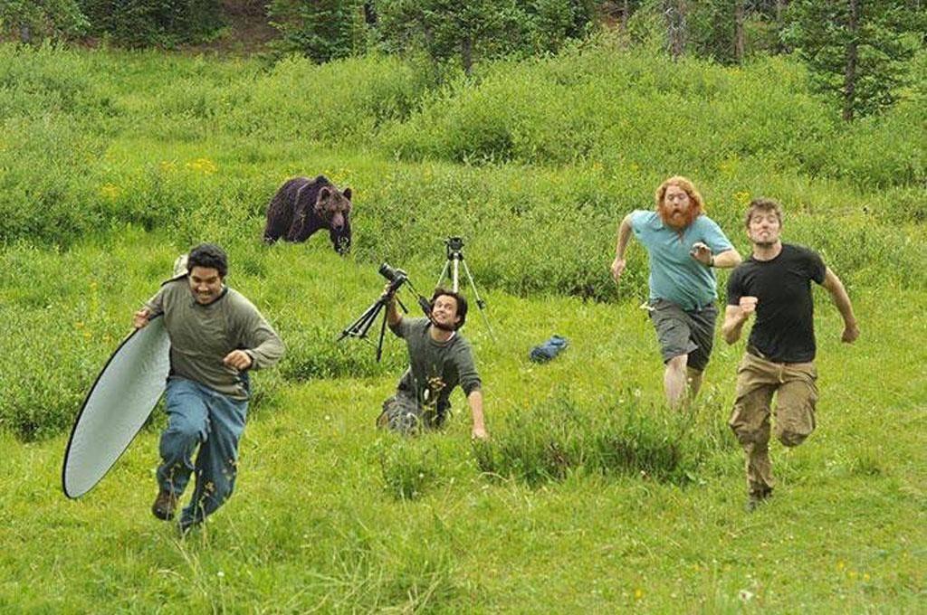 bear-running-92536