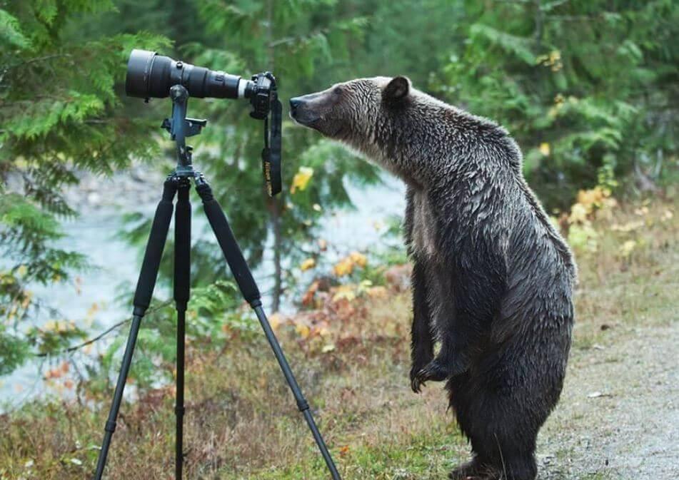 bear-with-camera.jpg-18711