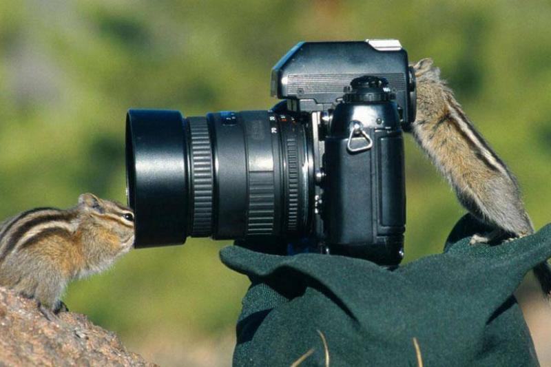 chipmunk-photography-98828