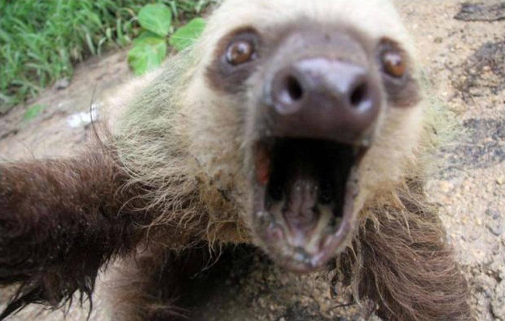 sloth-photo-94396