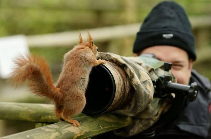 squirrel-camera.jpg-28263
