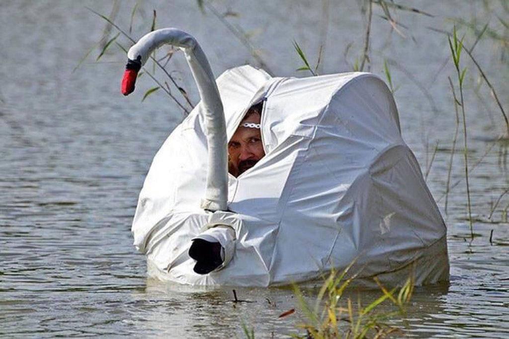 swan-photo-84886