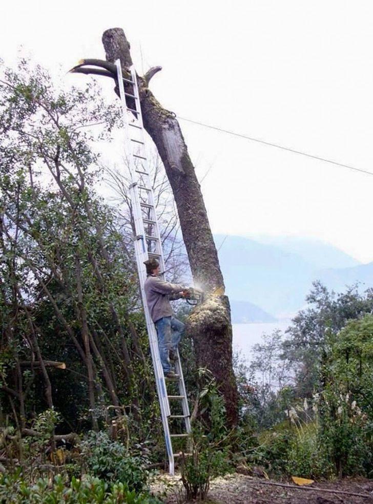 Pessoa em uma escada cortando a árvore na qual a escada é apoiada